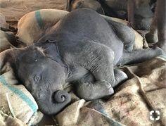 Cute Wild Animals, Cute Little Animals, Jungle Animals, Cute Funny Animals, Animals And Pets, Cute Baby Elephant, Baby Elephants, Most Beautiful Animals, Tier Fotos