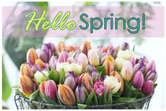 Hello Spring spring spring quotes hello spring welcome spring hello spring quotes hello spring images welcome spring images