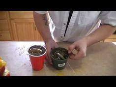Cómo sacar la semilla del mango