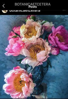 Turquoise Background, Peonies, Pink Flowers, Floral Wreath, Wreaths, Rose, Plants, Instagram, Art