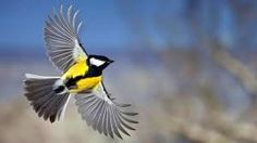 Amazing flying