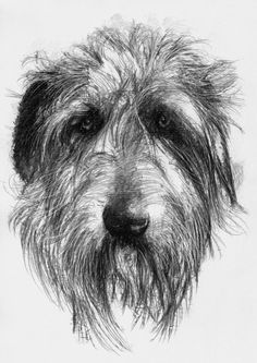 Wolfhound, Artist Sean Briggs producing a sketch a day, prints available at https://www.etsy.com/uk/shop/SketchyLife #art #drawing #http://etsy.me/1rARc0J #wolfhound