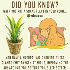 Snake Plant in the bedroom. All plants give off oxygen during photosynthesis whi. Snake Plant in t Home Remedies, Natural Remedies, Health Remedies, Asthma Remedies, Holistic Remedies, Herbal Remedies, Natural Air Purifier, Decoration Plante, Plant Health