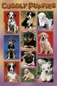 Cuddly puppies - Members of the K9 Club @ http://dogtraining-4gswcqzf.thetruthfulreviews.com