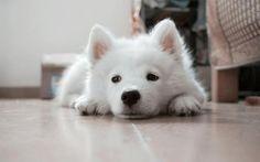 Tal como nós humanos, o seu amigo de quatro patas também pode sofrer com diarreia! #diarreia #cães #cachorros #animais #dogs