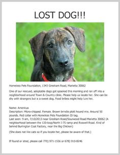 LOST 7-10-13 FEMALE BROWN BRINDLE PLOTT HOUND MIX 50 lbs RED COLLAR WITH HOMELESS PETS FOUNDATION ID TAG  GRESHAM AND SOURWOOD RD MARIETTA, GA  https://www.facebook.com/angelsrescue/posts/10151584684697912:0