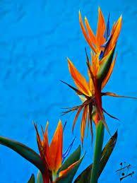 Resultado de imagem para imagenes de flores aves del paraiso