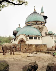 I was surprised to see such an unusual building at a zoo, much less a zoo in Budapest. I set up my camera to photograph the building, and then the elephant walked out. I was able to take two frames be
