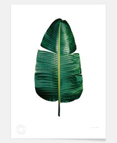 Classic-Botanical-Leaves-09 of clintonfriedman now on JUNIQE!