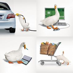 Sponsored: Aflac Real Cost Calculator, Don't wait till it's to late! Income Protection, Last Call, Beautiful Creatures, Baby Animals, How To Find Out, Bird, Pigeon, Calculator, Ducks