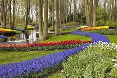 10 mooiste bloemenvelden van Nederland | Skyscanner