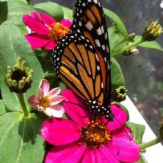 Moody Gardens Galveston