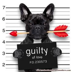 Photo about Valentines bulldog dog with rose in mouth as a mugshot guilty for love. Image of love, bulldog, date - 65133117 Valentine Day Week, Valentines Day Poems, Images For Valentines Day, Happy Valentines Day Funny, Valentine Dog, Valentine Hearts, Printable Valentine, Free Printable, Valentine's Day Quotes