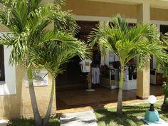 A Cuban paradise Enjoy the paradise of Cuba, especially Varadero beach and get a discount to stay with airbnb. click the link: Varadero Cuba, Cuba Travel, Cuban, Paradise, Island, Link, Beach, Plants, The Beach
