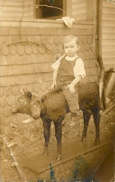 boy posing on a two headed calf