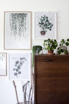 botanic gallery heimatbaum.com