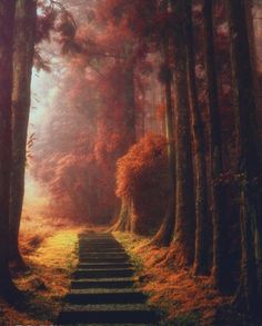 """""""A magical path in Taoyuan District, Taiwan   Photography by @maocool #WeLiveToExplore"""""""