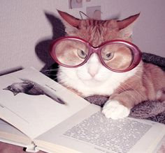 <b>Reading books is serious business, and no one knows that better than these twelve cats.</b>