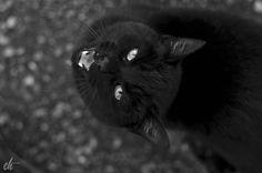 Black cat White Iris, Black And White, Cats, Animals, Black White, Gatos, Animales, Blanco Y Negro, Black N White