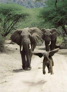 want to see more cute baby elephants? Go to www.authenticaa.com