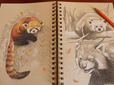 Red Panda by Dave Mottram Panda Sketch, Panda Drawing, Animal Sketches, Animal Drawings, Red Panda Cute, Copic, Woodland Art, Panda Art, Muse Art