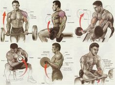 Biceps workout chart