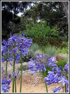 native Australian bush garden..by heatherlss