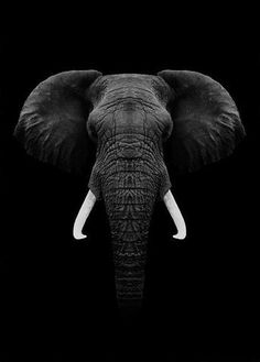 Black Elephant animal animals background iphone wallpaper wallpaper iphone you didn't know existed planet animal drawings and white animal photography animals baby animals animals animals Photo Elephant, Image Elephant, Elephant Pictures, Elephants Photos, Elephant Love, Elephant Art, African Elephant, African Animals, Elephant Poster