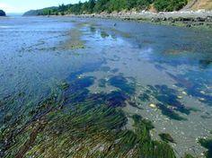 Gabriola Island - BC - Canada