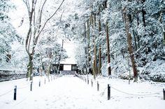 """""""今日の京都"""""""