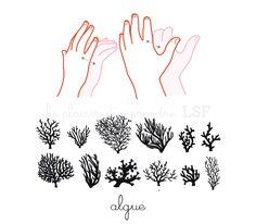 algue page dico