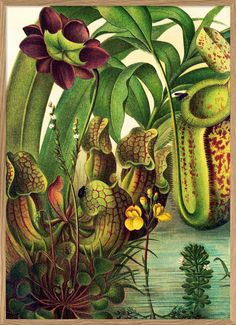 This astonishing encyclopedian print brings an great atmosphere to your wall. The original image dating back to the Available in various sizes. Nature Illustration, Botanical Illustration, Botanical Drawings, Botanical Prints, Jungle Scene, Decoupage, Art Prints, Abstract, Original Image
