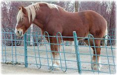 Big Jake ~ Tallest Horse In The World | Simply Marvelous Horse World
