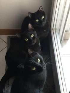 Black triplets - Golden eyes...