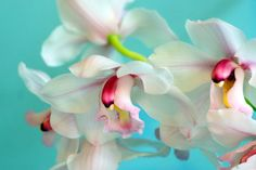 orchids#Repin By:Pinterest++ for iPad#