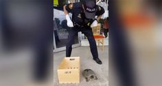 Snapping Turtle Resists Arrest