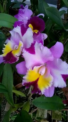 Wonderful Free Exotic Flowers purple Thoughts Neighborhood bouquets plus vegetation could be a wonderful accessory for almost any workplace or even family Wonderful Flowers, Beautiful Roses, Purple Flowers, Beautiful Flowers, Blue Orchids, Orchid Flowers, Orchids Garden, Orchid Plants, Exotic Flowers