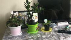 Plant Catalogs, Indoor Plants, House Plants, Inside Plants, Home Plants, Houseplants, Indoor House Plants, Foliage Plants, Container Plants