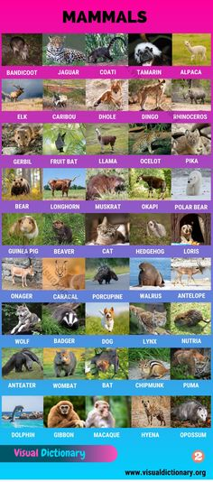 African Buffalo, African Wild Dog, Animals Name In English, Spectacled Bear, Giant Tortoise, Visual Dictionary, Learn English, English Study, English Lessons