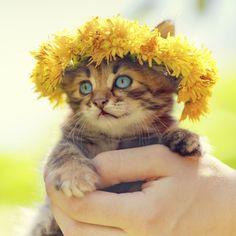 Wearable Flowers......   Don't Knock it 'til you've tried it!!! #Flowers #Floral #Fashion #Design #Cat #Cats #Feline #Catwalkwear