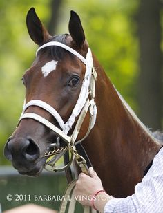 Barbara Livingston's photo tribute to 2011 Horse of the Year Havre de Grace