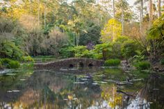 Tamborine Mountain Botanic Gardens Tamborine Mountain, English Country Gardens, Garden S, Photo Location, Gold Coast, Botanical Gardens, Wander, Gems, Australia