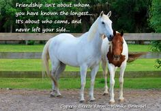 horse quotes about friendship - Google Search