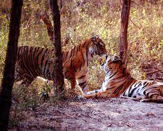 Sanjay Gandhi National Park, List Of National Parks, Project Tiger, Gir Forest, Jim Corbett National Park, King Cobra, National Forest, Hyderabad, World Heritage Sites