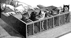 bizarre musical instruments - An illustration of a cat organ, what on Earth were they thinking?