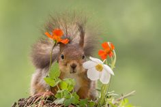 peeking by Geert Weggen on 500px