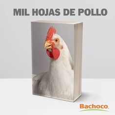 Some Fun, Rooster, Animals, Frases, Animaux, Animal, Animales, Animais, Chicken