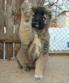 Mongrel, Animal Rights, Akita, Dog Friends, Fur Babies, Cute Dogs, Pup, Animals, People