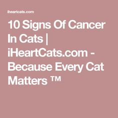 10 Signs Of Cancer In Cats | iHeartCats.com - Because Every Cat Matters ™