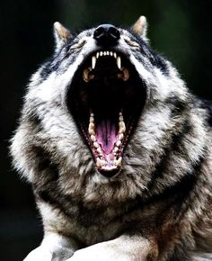 Ex Nihilo - Distribuidora Anarquista: La disidencia como herramienta revolucionaria